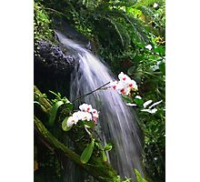 Orchids Waterfall Paradise Photographic Print