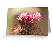 succulent plant in the garden Greeting Card