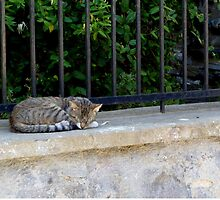 Sleeping Cat by Vicki Spindler (VHS Photography)