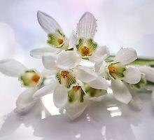 Beautiful Snowdrops by Martina Cross