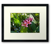 Tropical Paradise - Fragrant, Hot Pink Plumeria in a Lush Garden Framed Print