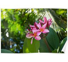 Tropical Paradise - Fragrant, Hot Pink Plumeria in a Lush Garden Poster