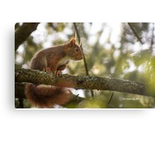 The hypnotized squirrel Metal Print