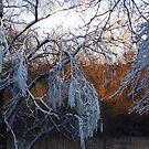 January riverside by Bluesrose