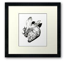 Natural History - Fish Framed Print