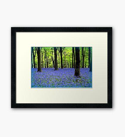 Haze Of Blue - Bluebell Wood Dorset Framed Print