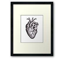 Heart Anatomy Framed Print