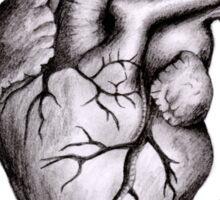 Heart Anatomy Sticker