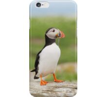 Puffin iPhone Case/Skin