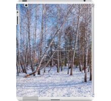 Birch trees in the snow iPad Case/Skin