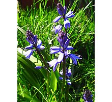 English Blue Bells - Flowers Photographic Print