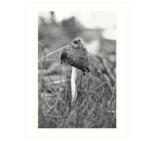 Mushroom in the Grass Art Print
