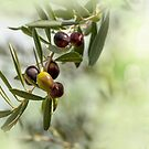 Ripe Olives Branch by savage1