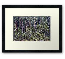 1.5.2014: Sleet in Coniferous Forest Framed Print
