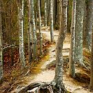 Beaten Path by Sunshinesmile83