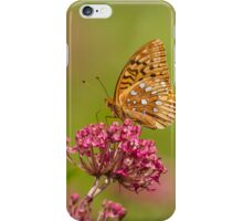 Fritillary On Milkweed 2014-2 iPhone Case/Skin