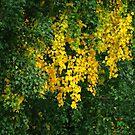 Autumn gold by Bluesrose