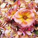 Rose and petals by Roz McQuillan