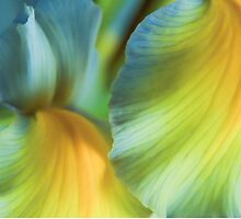 Iris Fantasy by Colleen Farrell