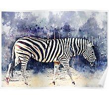Zebra art Poster