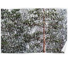 1.5.2014: Sleet and Pine Trees I Poster