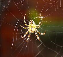 Unique Spider Design by Vincent J. Newman