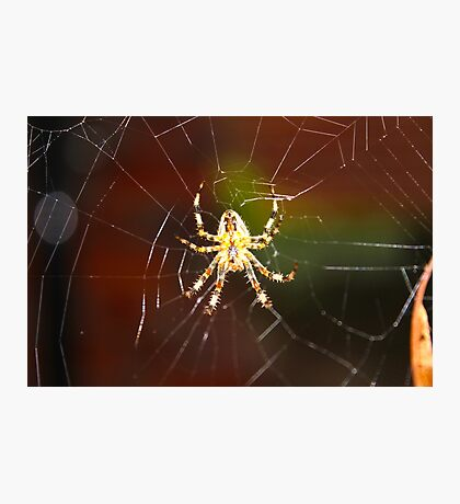 Unique Spider Design Photographic Print
