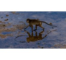 Monkey reflecting time  Photographic Print