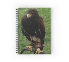 Harris Hawk on Bow Perch Spiral Notebook