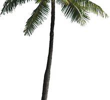 Palm Tree - Cuba by StyleandCoffee
