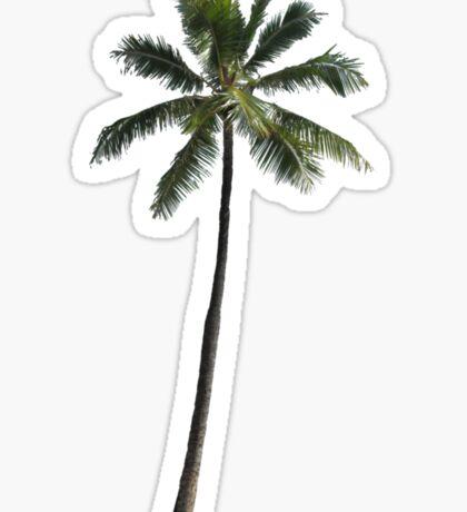 Palm Tree - Cuba Sticker