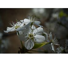 Blossoming Spring Photographic Print