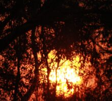 Fiery Sunset Through The Eucalypts Sticker