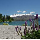 Lupins and the Wanaka Tree by Larry Lingard-Davis