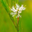 White flower by Jessy Willemse