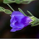 Deep Purple  by Jessy Willemse
