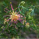 Australian native II by Jessy Willemse