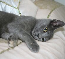 Grey Kitten Relaxed On A Bed by taiche