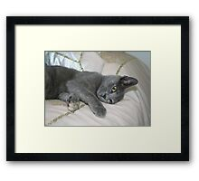 Grey Kitten Relaxed On A Bed Framed Print