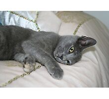 Grey Kitten Relaxed On A Bed Photographic Print