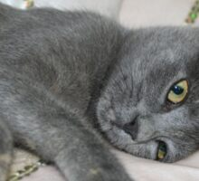 Grey Kitten Relaxed On A Bed Sticker