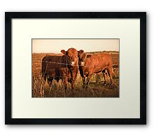Outback Cows  Framed Print