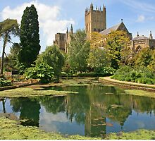 Bishop's Palace Garden, Wells by RedHillDigital