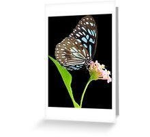 Butterfly 4- Blue triangle Greeting Card