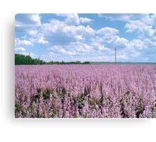 "The big season of a lavender 2. "" The lavender sea"" Canvas Print"