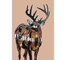 Starry Deer Photographic Print