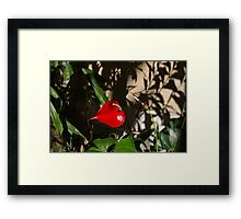 Glossy Scarlet Heart in the Shadows - an Elegant Anthurium Flower Framed Print