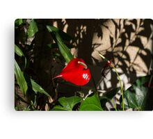 Glossy Scarlet Heart in the Shadows - an Elegant Anthurium Flower Canvas Print