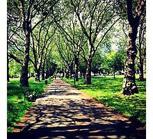 London Summer Park Path Photographic Print