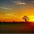 Under a Sunset Sky by Vicki Field